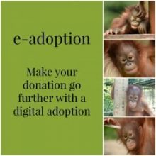 Digital Adoption 246 246 85 S