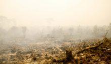Page 6 Fire Devastation At Sabangau