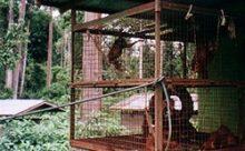 Old Enclosure