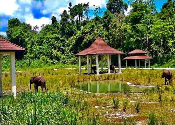 WRU Elephants exploring their new home