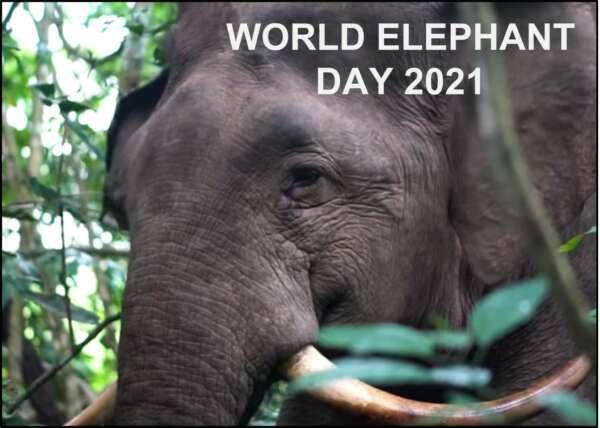 World Ele Day image