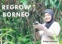 Regrow Borneo main image