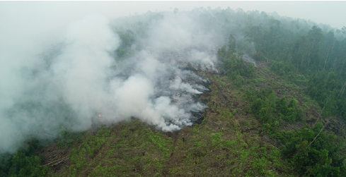 Aerial Image Of Peat Fire