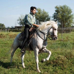 A Day with The Camargue Horse's - Manade Fernay
