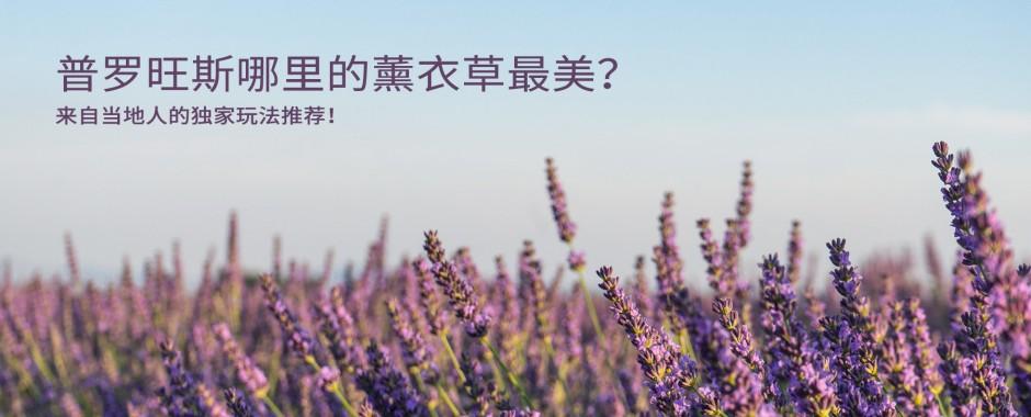 南法夏日最浪漫的薰衣草花田
