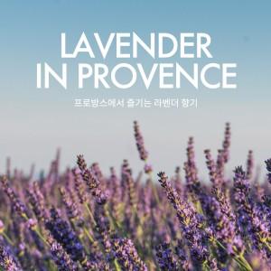 프로방스의 라벤더