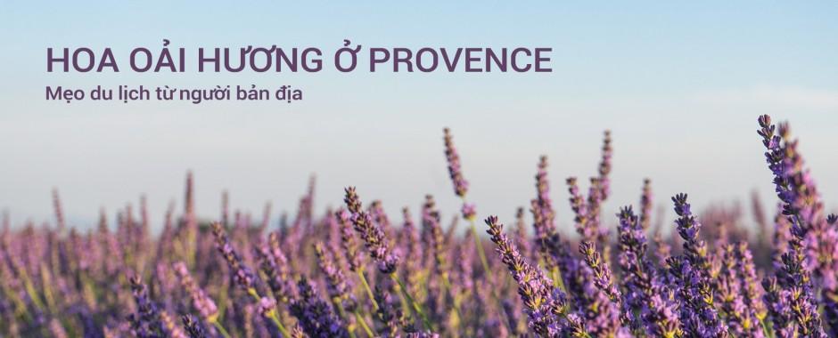 LAVENDER Ở PROVENCE