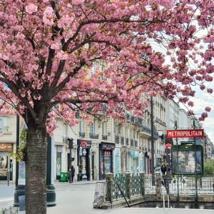 The 10 must parisian flower photo places to visit