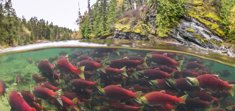 wild-salmon-river-tavish-campbell