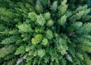 drone-photography-british-columbia-canada-forest