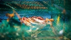 Crab-sustainable-fishing-Philippines