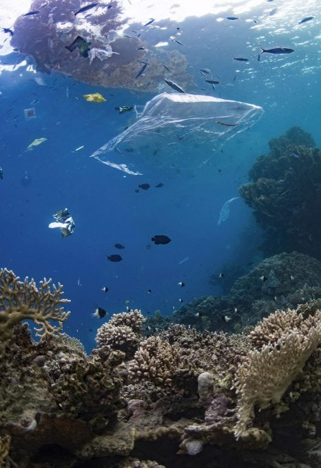 plastic-bag-ocean-coral-reef-underwater-photography