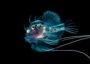 Marine life, Scotland, expedition diving, St Kilda, diving, divers, Outer Hebrides, scuba