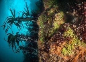 Colourful sea walls, marine life, Scotland, expedition diving, St Kilda, diving, divers, Outer Hebrides, scuba