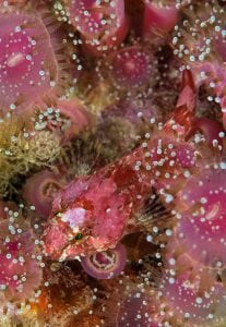 Marine life, Scotland, expedition diving, St Kilda, diving, divers, Outer Hebrides, scuba
