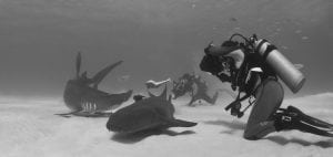 studying-sharks-hammerhead-nurse-shark-bimini