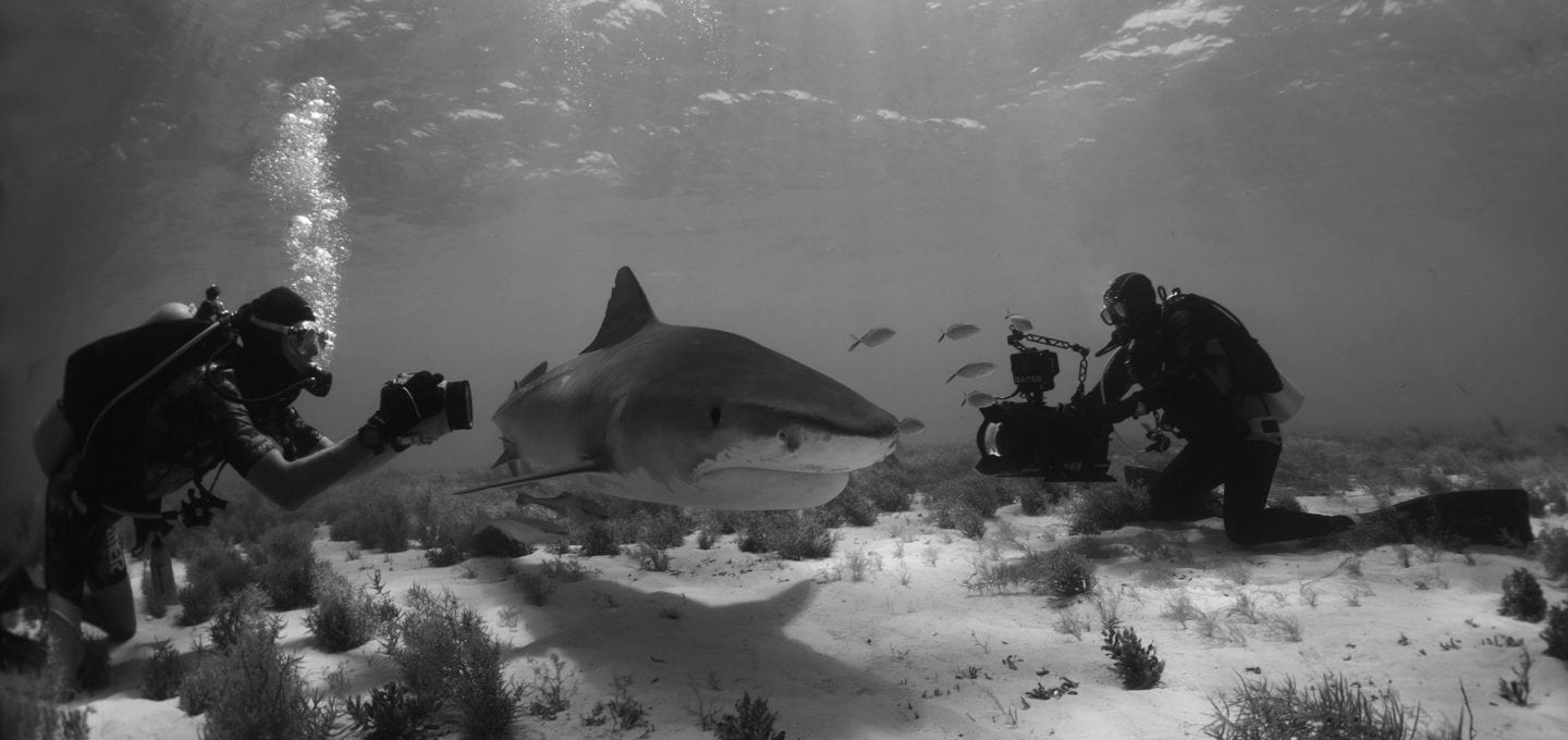 tiger-shark-ocean-floor-marine-scientist-photography