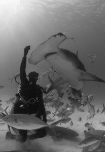 hammerhead-shark-research-marine-conservation