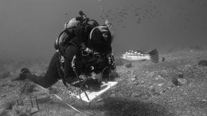 Diver-Reef-Check-HELEN-BRIERLEY