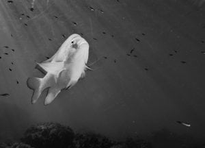 diving-california-Reef-Check-HELEN-BRIERLEY