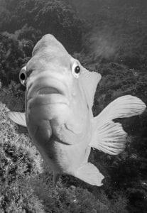 fish-Reef-Check-HELEN-BRIERLEY