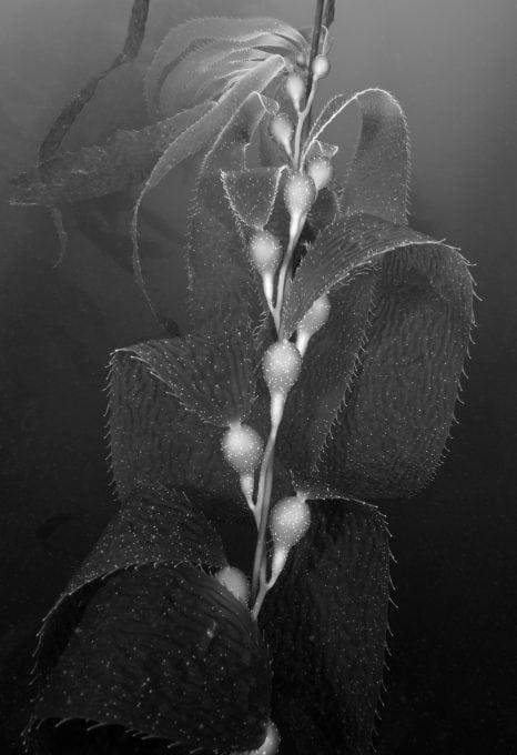 Underwater-photography-Reef-Check-HELEN-BRIERLEY