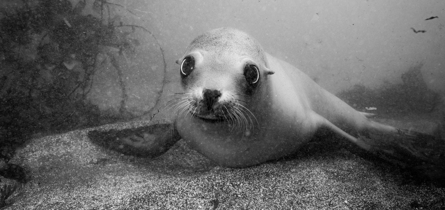 california-seal-reef check-HELEN-BRIERLEY
