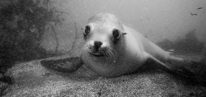 california-seal-reef check-HELEN-BRIERLEY