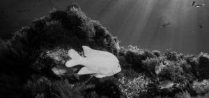 california-Reef-Check-HELEN-BRIERLEY