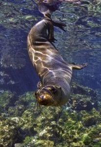 Galapagos, marine life, underwater