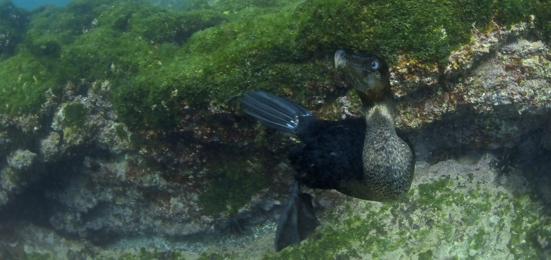 Galapagos marine life, biodiversity