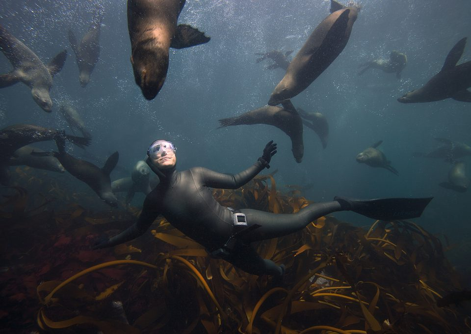 hanli-prinsloo-underwater-photography-south-africa-peter-marshall-seals