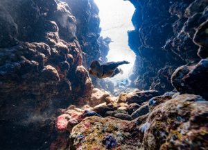 breath-hold-underwater-photography-freediving-daan-verhoeven
