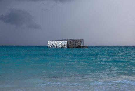 coralarium-jason-decairnes-taylor-maldives-cat-vinton