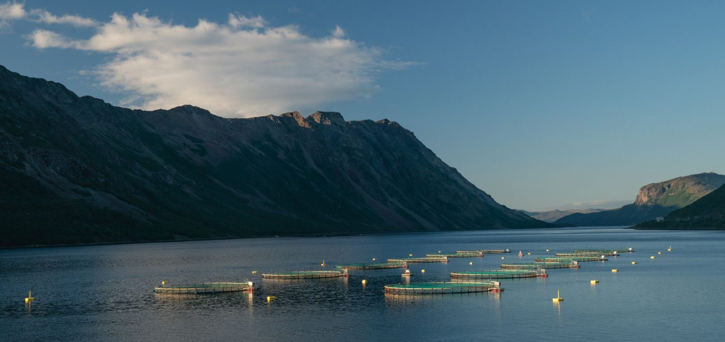 ARTIFISHAL-film-patagonia-salmon-farming-fisheries-ben-moon