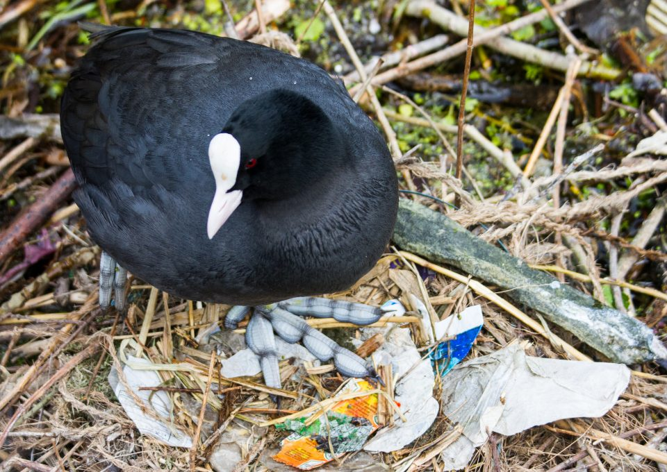 Lizzie carr plastic patrol paddleboarding coot nest