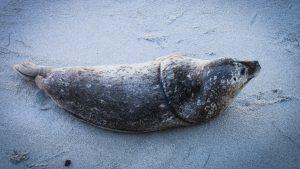 G20-marine-plastic-deal-seal