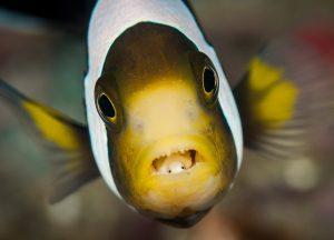 World-Beneath-Richard-Smith-marine-biologist-fish-macro