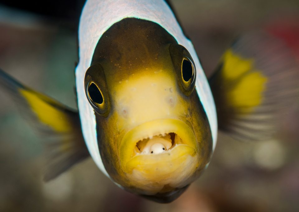 World-Beneath-Richard-Smith-marine-biologist-fish-macro