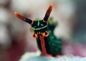 World-Beneath-Richard-Smith-marine-biologist-sea-snail
