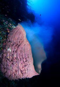 World-Beneath-Richard-Smith-marine-biologist