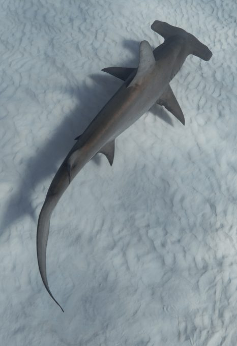 Taylor-henley-underwater-photographer-hammerhead
