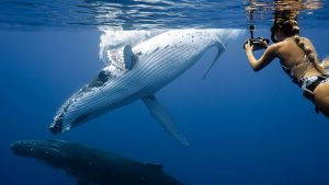 Taylor-henley-underwater-photographer-whales
