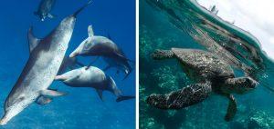Taylor-henley-underwater-photographer-turtle-dolphin
