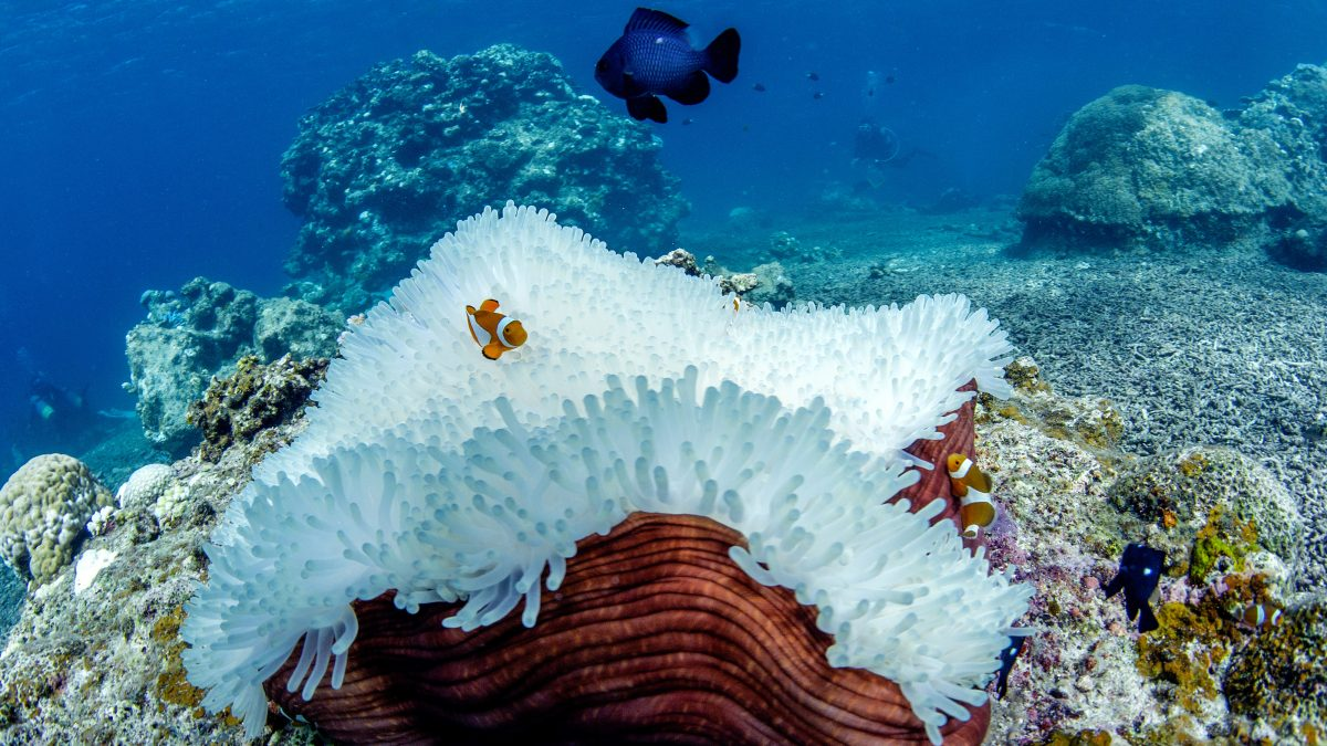 great-barrier-reef-coral-bleaching
