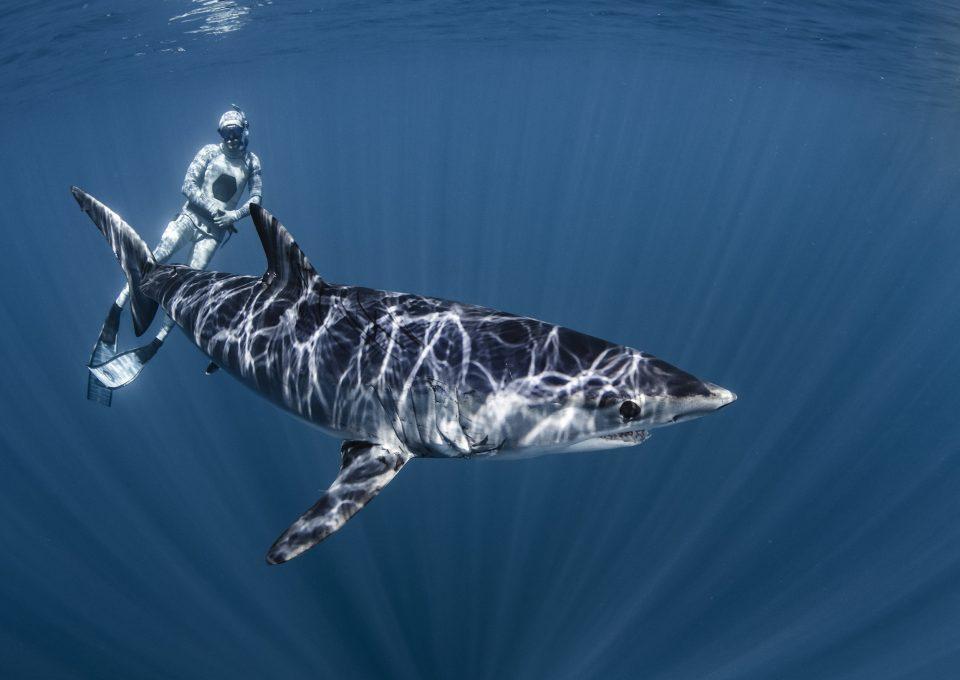 Mako shark, Shawn Heinrichs, New Zealand, CITES