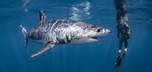 Mako shark, New Zealand, CITES, Shawn Heinrich's, Riley Elliott