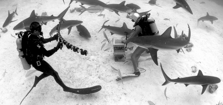 Andy-Casagrande-shark-week-sharks-conservation-underwater-camera