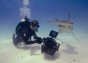Andy-Casagrande-shark-week-sharks-conservation-hammerhead