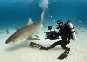 Andy-Casagrande-shark-week-sharks-conservation-cinematographer